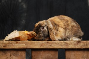 waarom.bijt een konijn